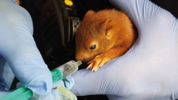 baby squirrel credit karlsruhe police _102929576_048601307