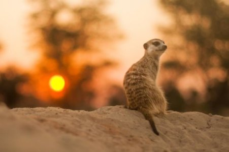 meerkat 180830113030_1_540x360