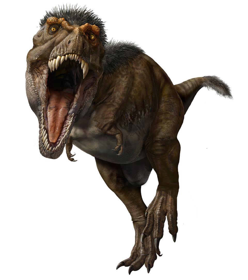 t rex 5c81951a26289802157a2e89-960-1081