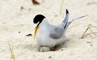 1091658_1_1023-bird-endangered-list_standard