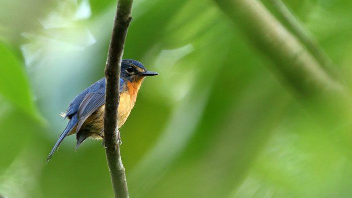 010820_JB_bird-species_feat-1028x579